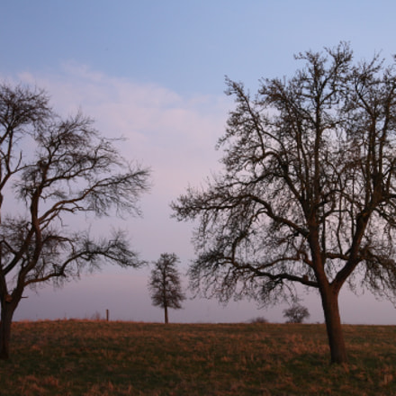 The Apple Trees, Canon EOS 5D, Tamron SP AF 28-75mm f/2.8 XR Di LD Aspherical [IF] Macro
