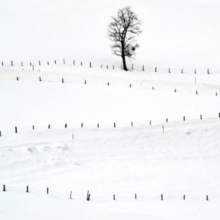 Fences, Nikon D3100, Sigma 70-300mm F4-5.6 APO DG Macro HSM