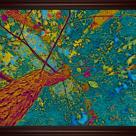 A Tree of Beauty, Canon POWERSHOT ELPH 110 HS