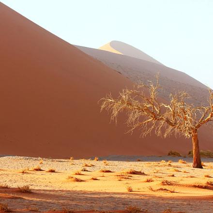 Dunes morning light, Canon EOS 550D, Canon EF 70-200mm f/4L