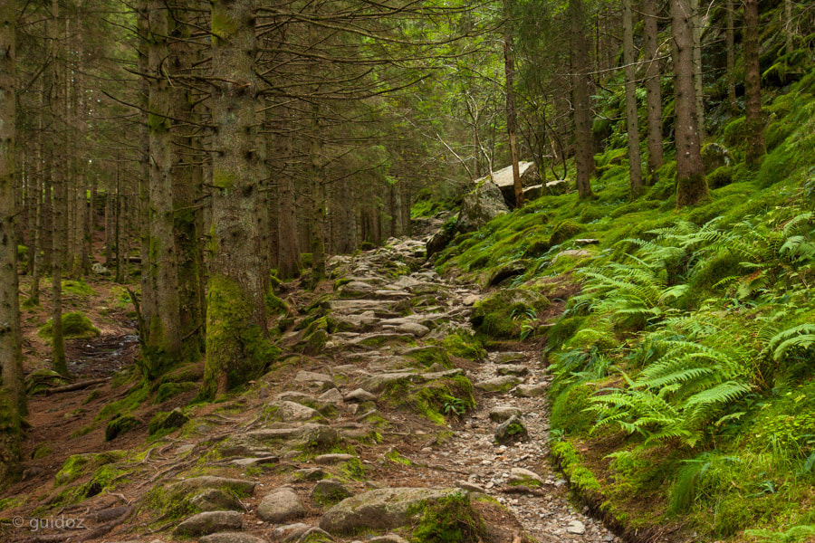 Photograph Norwegian wood by Guido Todarello on 500px
