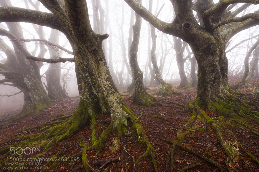 Photograph A Forest in a Dream by Maxime Courty on 500px