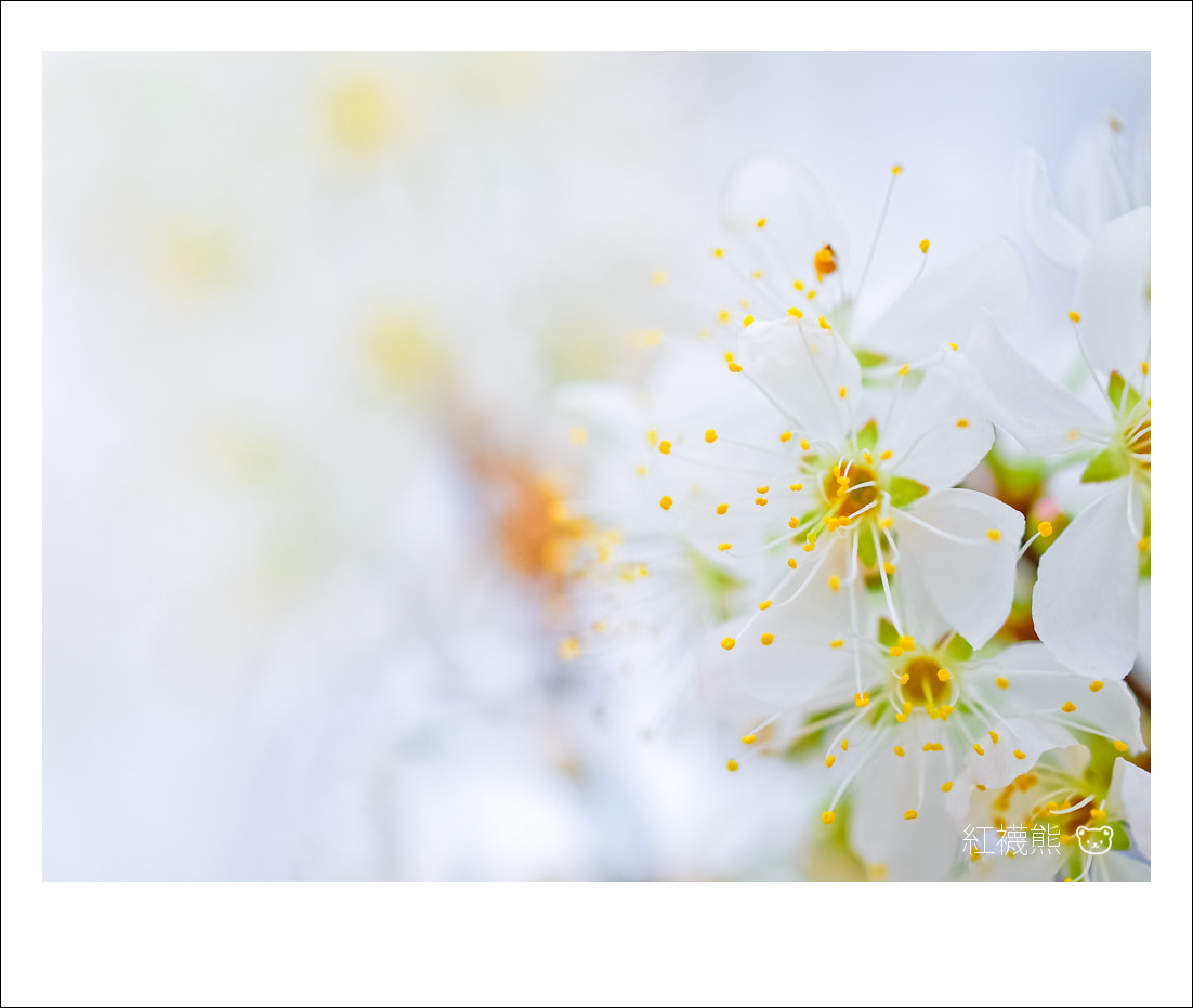 Photograph 黃芝麻 by Kyle Lin on 500px