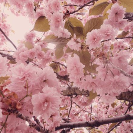 Tree Blossoming, Sony DSC-W310