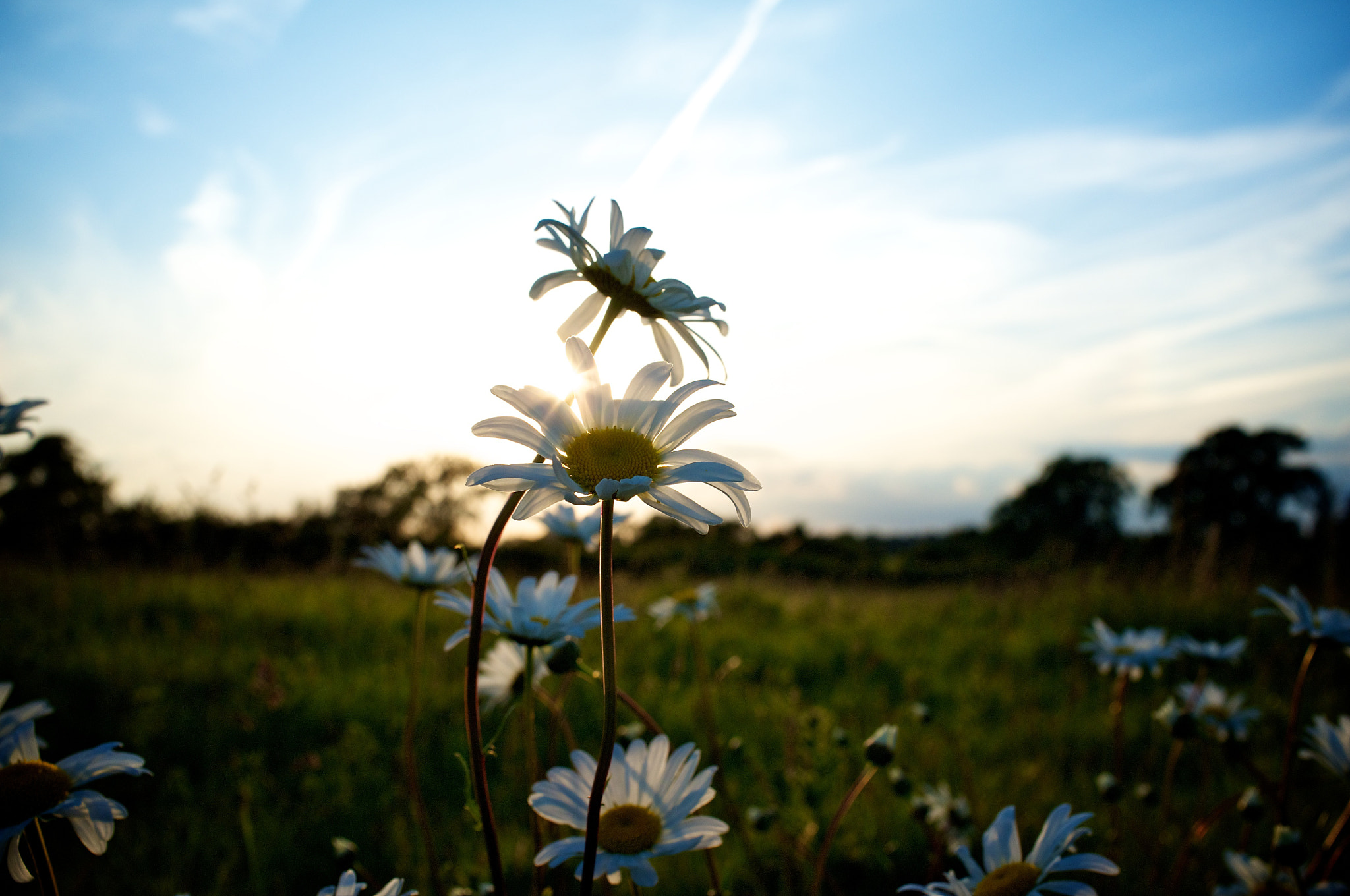Photograph Flowers in a field  by Gavin Nugent on 500px