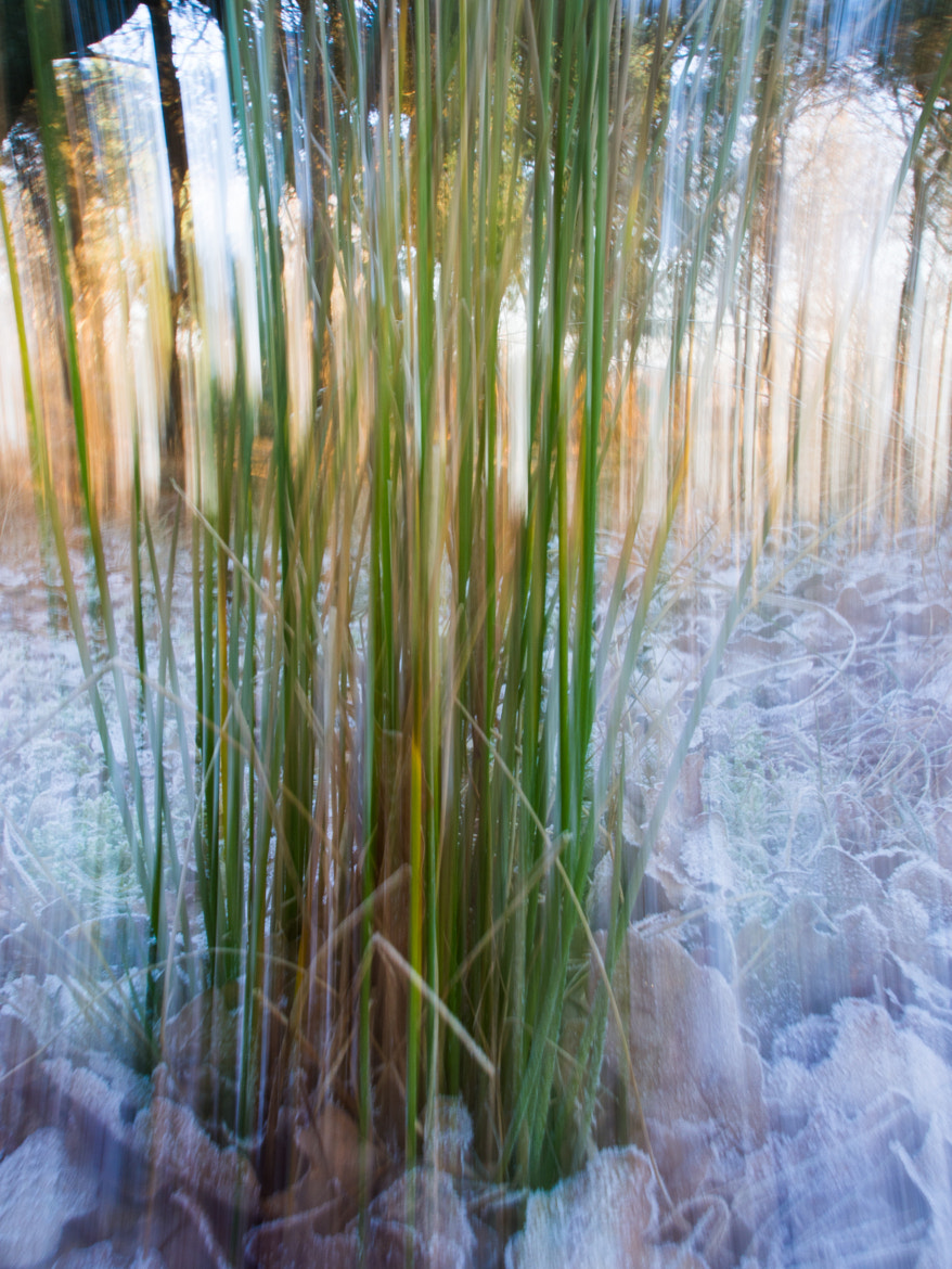 Photograph Frozen Grass by Kenny Hindgren on 500px
