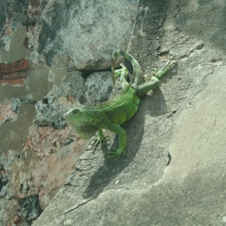 Gecko on a rock, Canon EOS DIGITAL REBEL XTI, Canon EF-S 18-55mm f/3.5-5.6 IS II