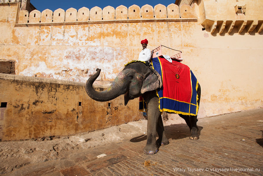 Photograph Jaipur Dambo  by Vitaly Taysaev on 500px