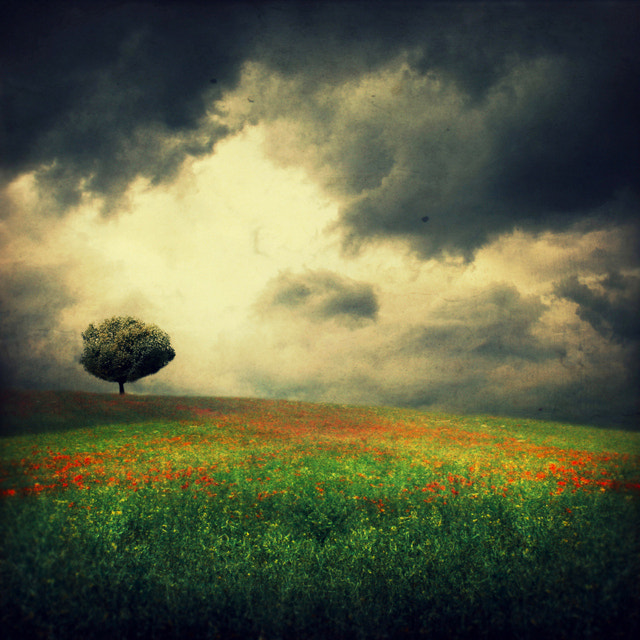Photograph before the storm by Barbara Florczyk on 500px