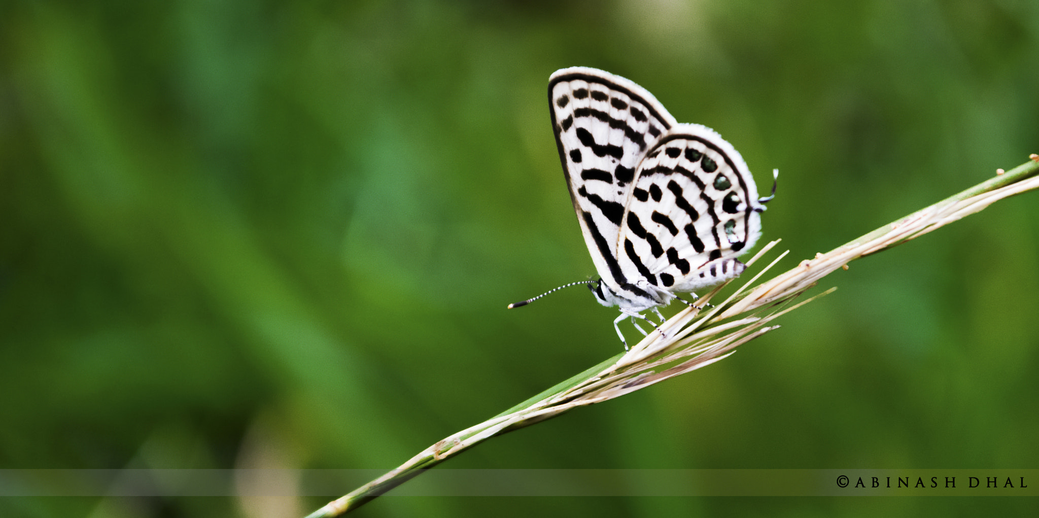 Photograph Small Steps by Abinash Dhal on 500px