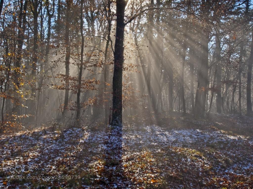 Photograph Cloak of Light by Siniša Almaši on 500px