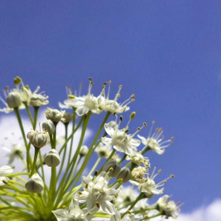 white Flowers, Sony DSC-S5000