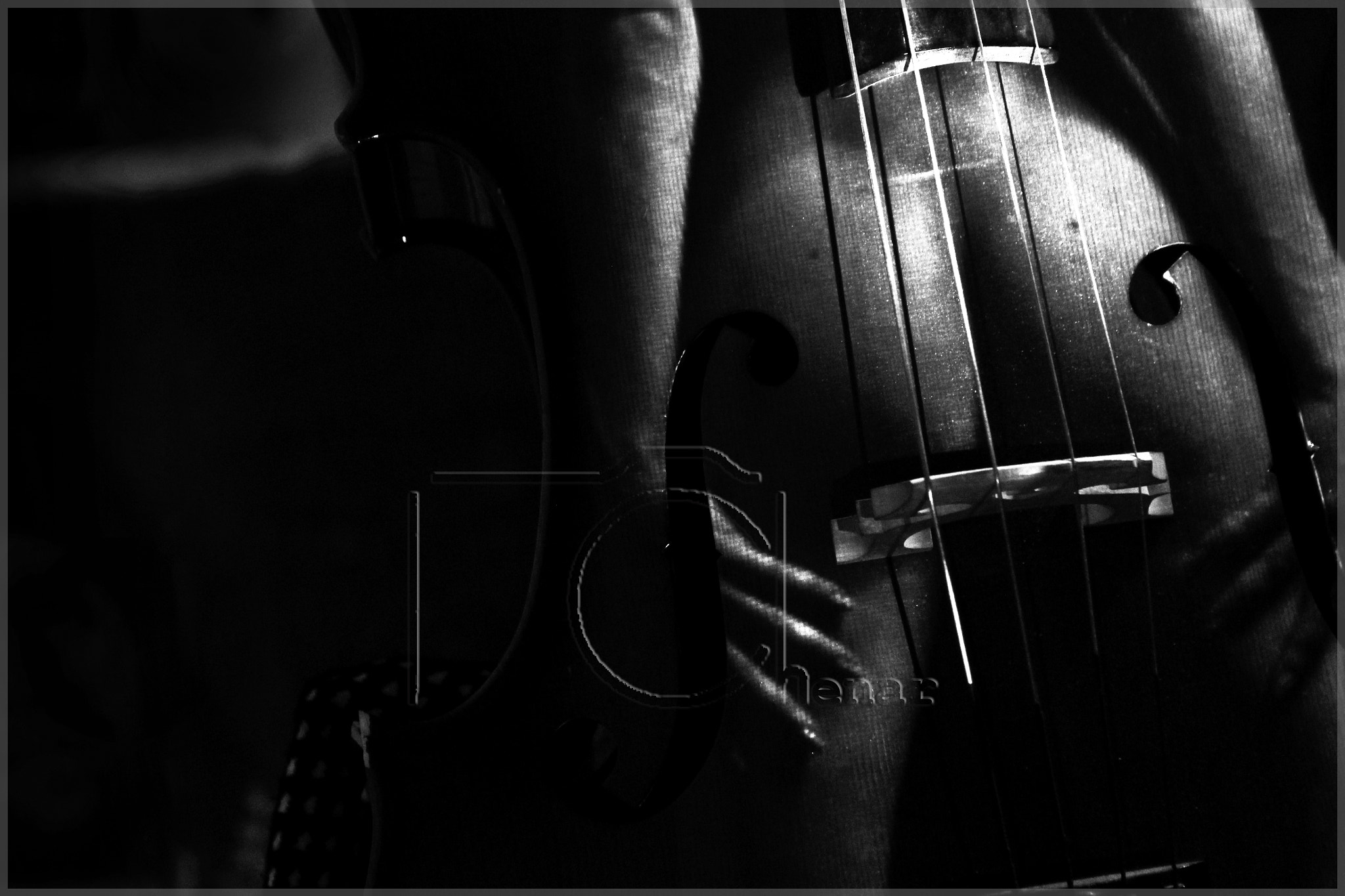Photograph Cello.. by Chenar  Othman on 500px