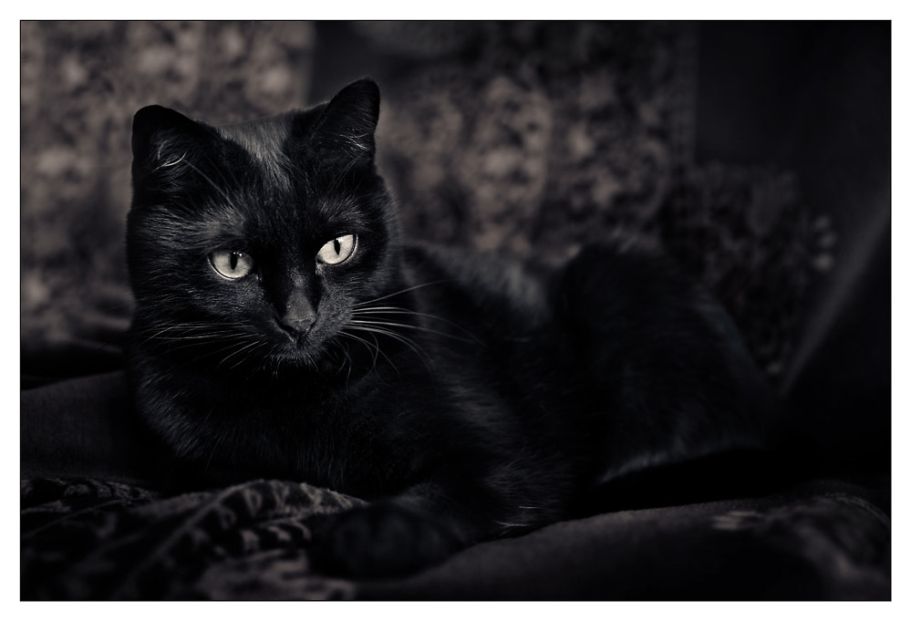 Photograph Just black by Roland A. on 500px