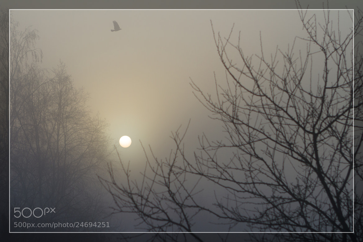 Photograph Fog & Sun by Brouno on 500px