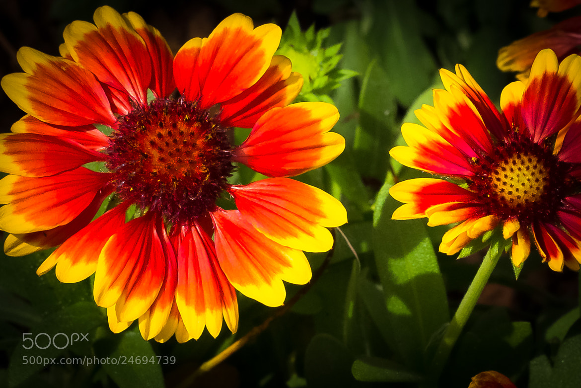 Photograph Red & Yellow by George Bloise on 500px