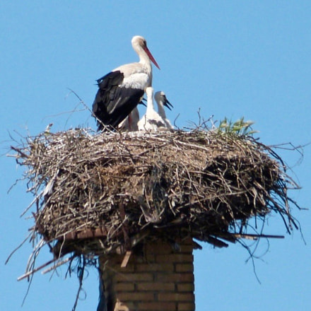 White Stork Family on, Panasonic DMC-FZ47