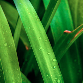 3 Science discovers massive scale of plant life water usage