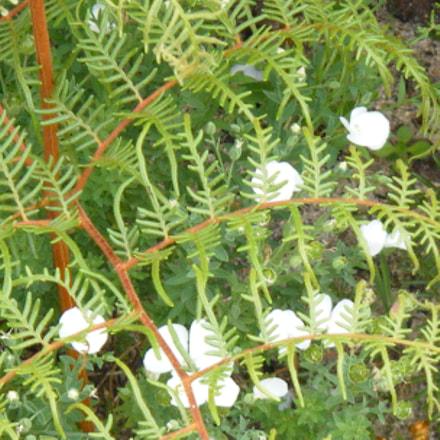 Flowers in New Zealand, Fujifilm FinePix Z33WP