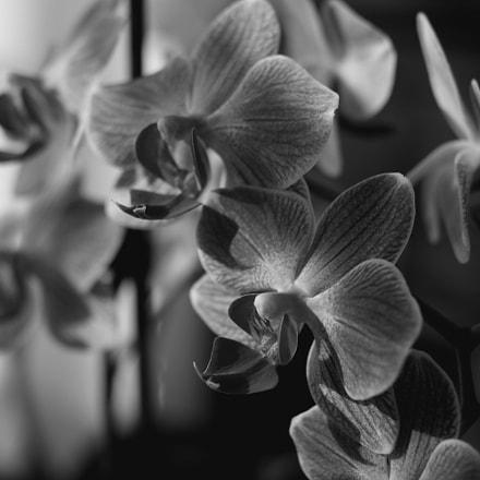 Orchidées, RICOH PENTAX K-3
