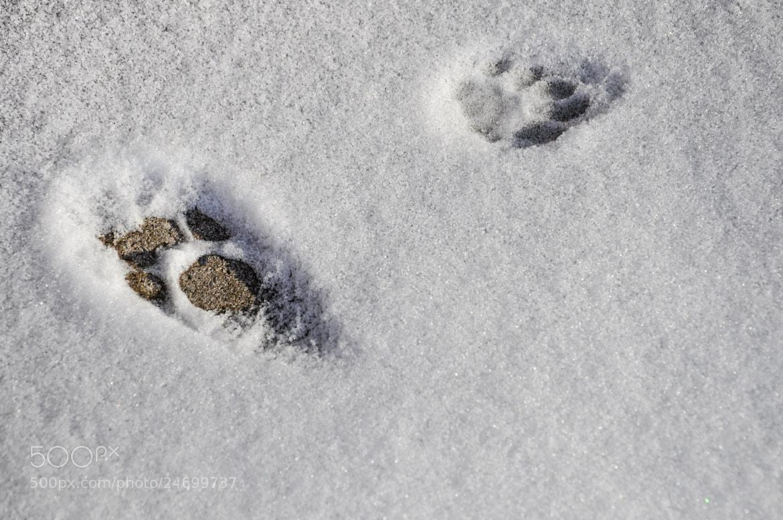 Photograph Footsteps of a Cat by Fabian Vügten on 500px