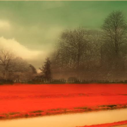 Red Fields, Nikon COOLPIX L21
