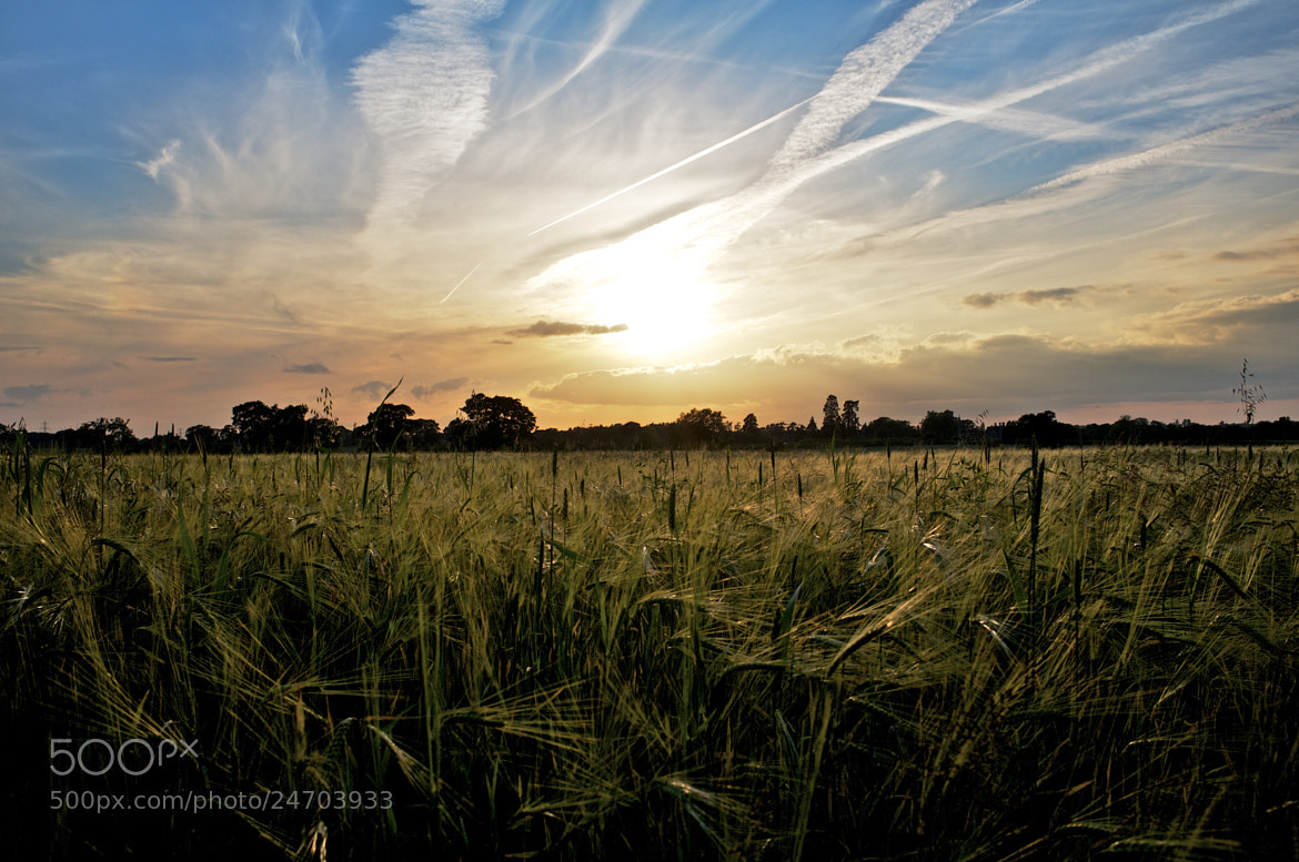 Photograph Sunset field by Gavin Nugent on 500px