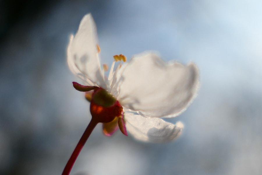 Frissonnante (Tingly) de Christine Druesne sur 500px.com