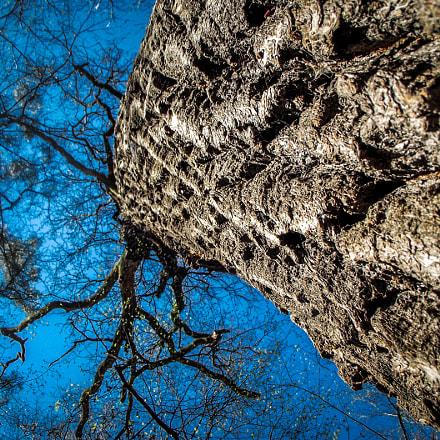 tree, Fujifilm FinePix S2500HD