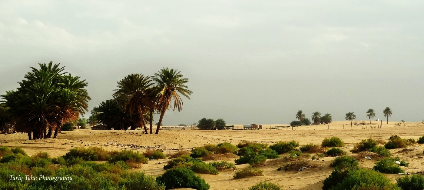 Photograph Palm trees scatters along the horizon by Tariq Taha on 500px