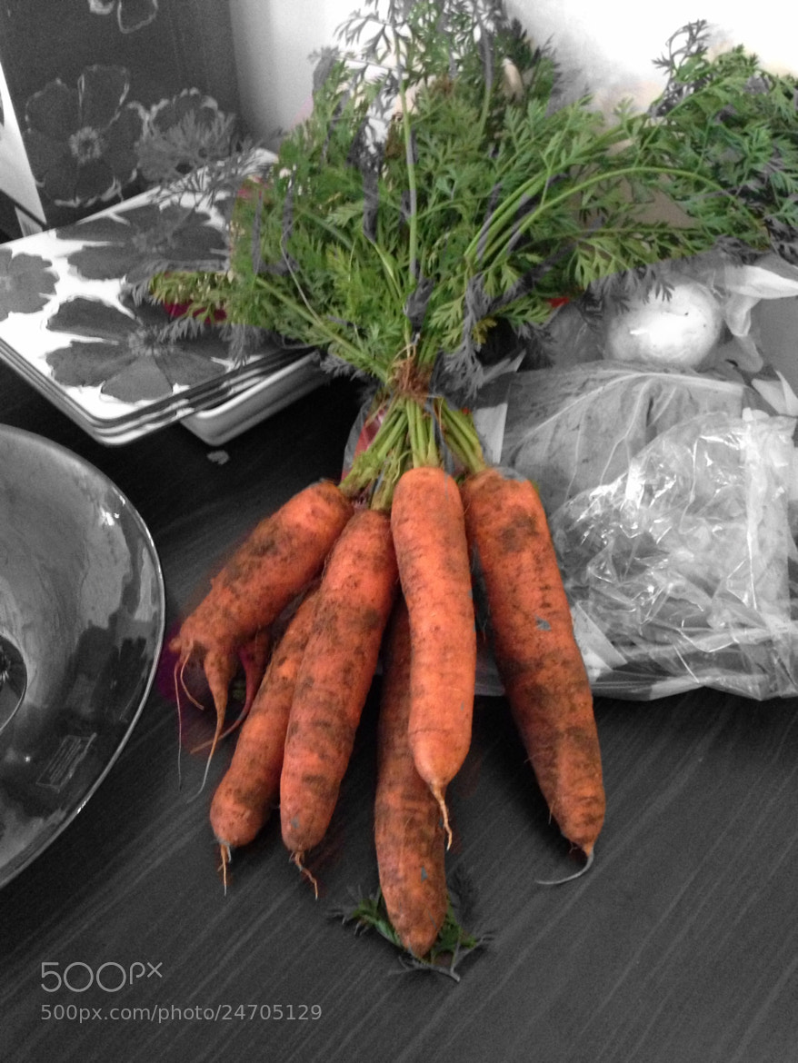 Photograph Carrots  by Bob Riach on 500px
