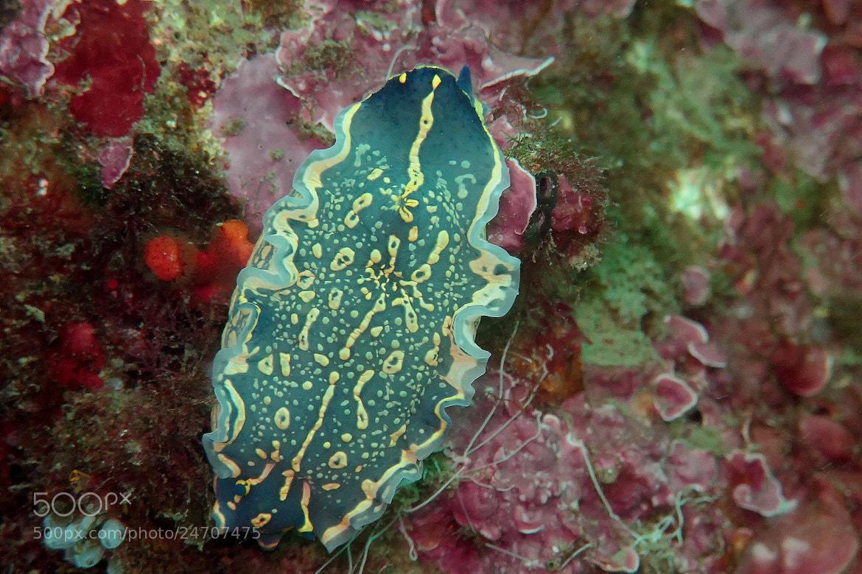 Photograph Nudibranquio by Javier Morago Cruz on 500px