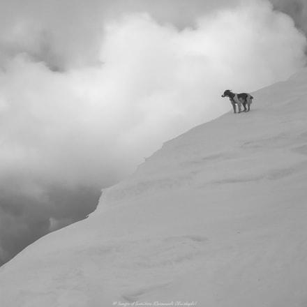 Nature et chien, Panasonic DMC-LS2