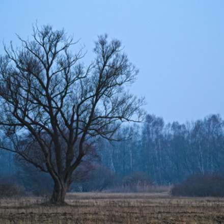Waiting for the Spring, Nikon 1 V1, 1 NIKKOR VR 30-110mm f/3.8-5.6