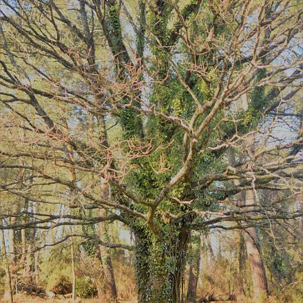 The big tree, Nikon D3300, AF-S DX Nikkor 35mm f/1.8G