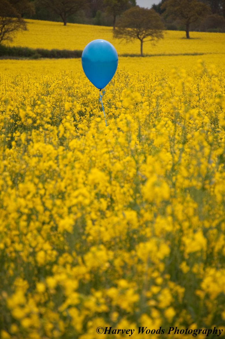 Photograph Blue Balloon by Harvey Woods on 500px