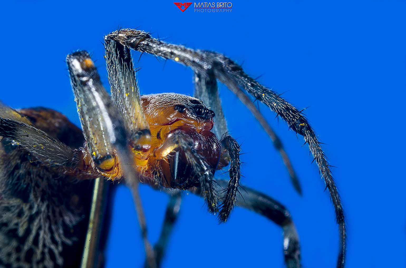 Photograph SPIDER 1 by Matias Brito on 500px