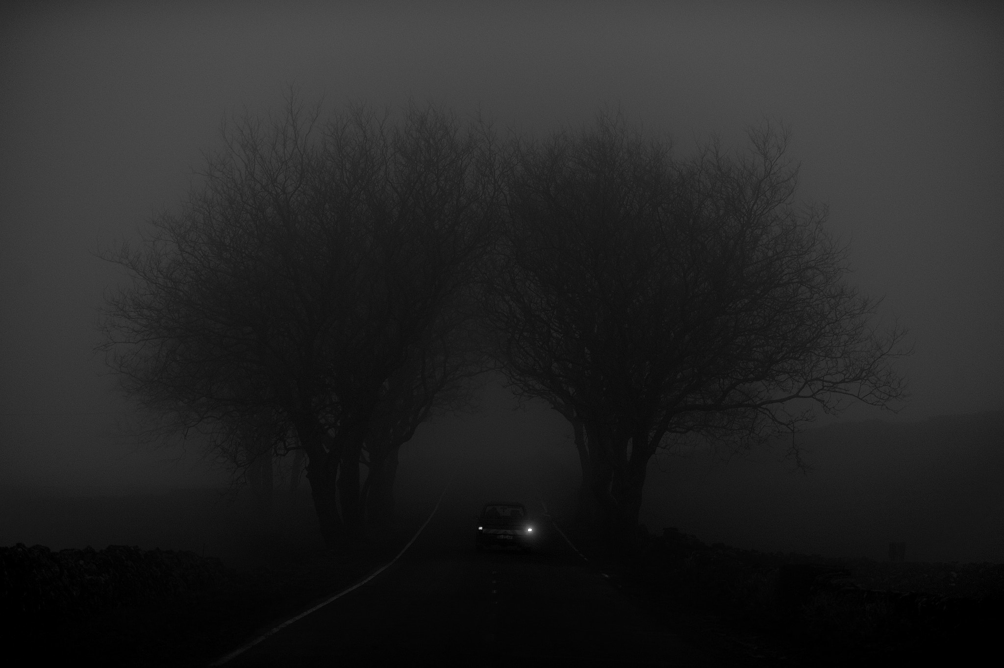 Photograph Fog by Rui Caria on 500px