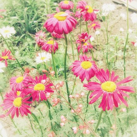 Garden bliss, Canon POWERSHOT A480