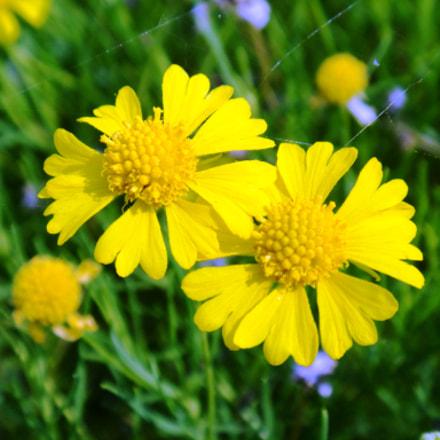Small flowers, Sony DSC-T110