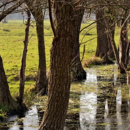 wetland, Nikon D5100, AF-S DX VR Zoom-Nikkor 55-200mm f/4-5.6G IF-ED