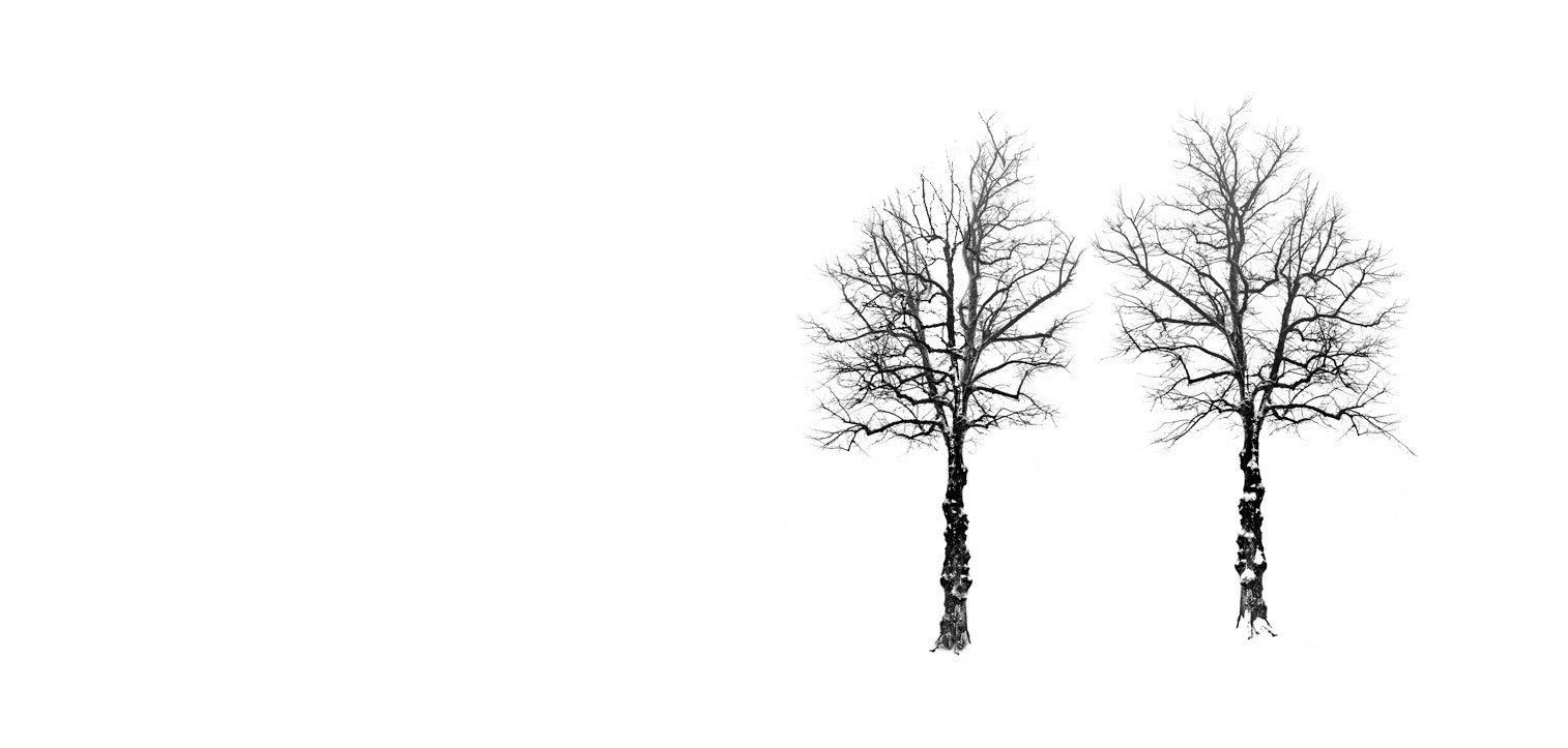 Photograph Trees in winter by Mikael Sundberg on 500px