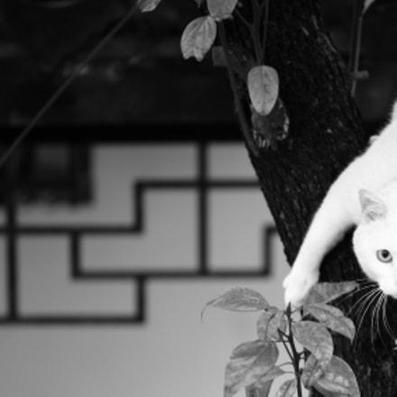 Cat, Canon EOS 5D MARK II, Sigma APO Macro 150mm f/2.8 EX DG HSM