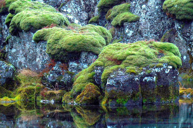 Photograph Reflections and Moss by Kim C on 500px