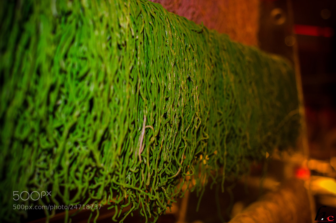 Photograph Green Nodels  by HC  Photos on 500px