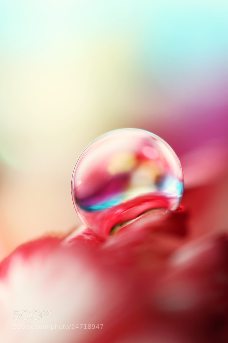 Photograph Dreamy Droplet by Sharon Johnstone on 500px