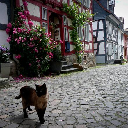 Cat s Street in, Panasonic DMC-TZ3