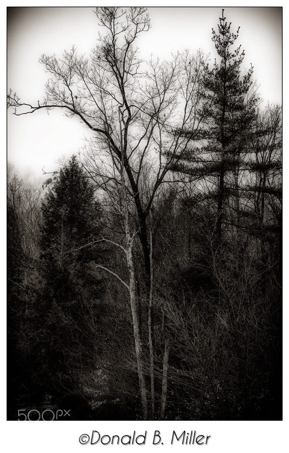 Photograph Winter Trees by Donald Miller on 500px