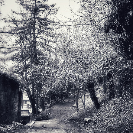 Galaverna, frost on the, Nikon COOLPIX L19