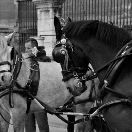 Horses, Nikon D7000, Sigma 18-125mm F3.5-5.6 DC
